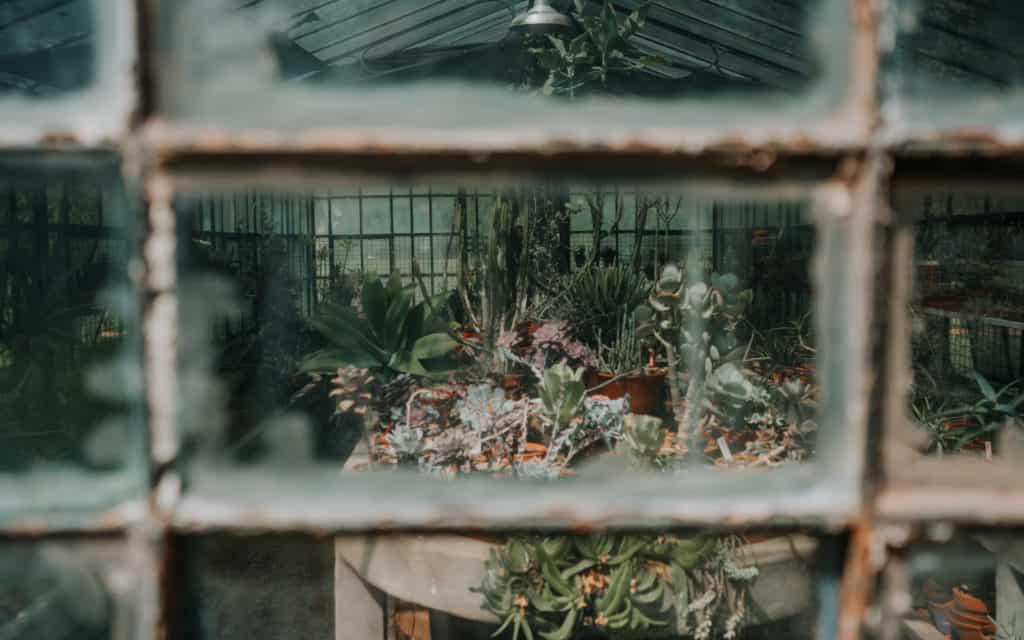 buenos-aires ogród botaniczny szklarnia co zobaczyć