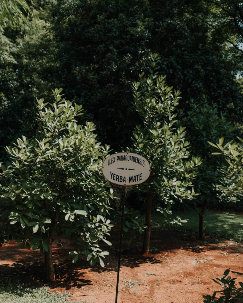 ogród botaniczny yerba mate