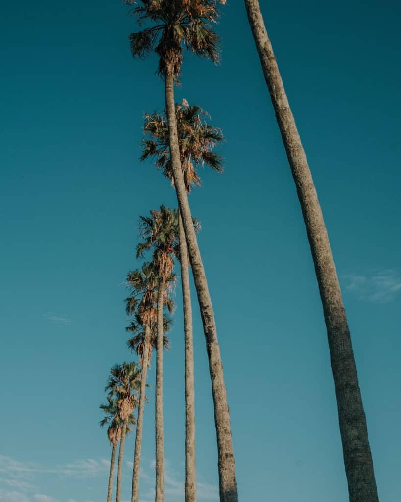 Palmy w Santa Teresa Urugwaj