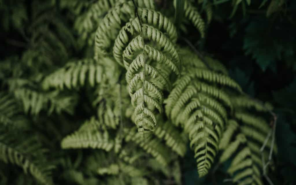 roślinność Madera najlepsze szlaki lost studio