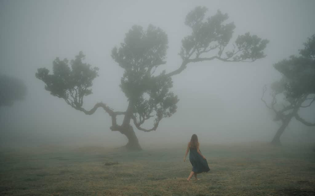 Zamglony las w Fanal Madera najlepsze szlaki