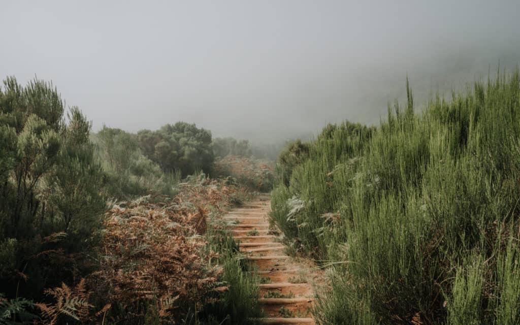 Fanal Madera najlepsze fotospoty