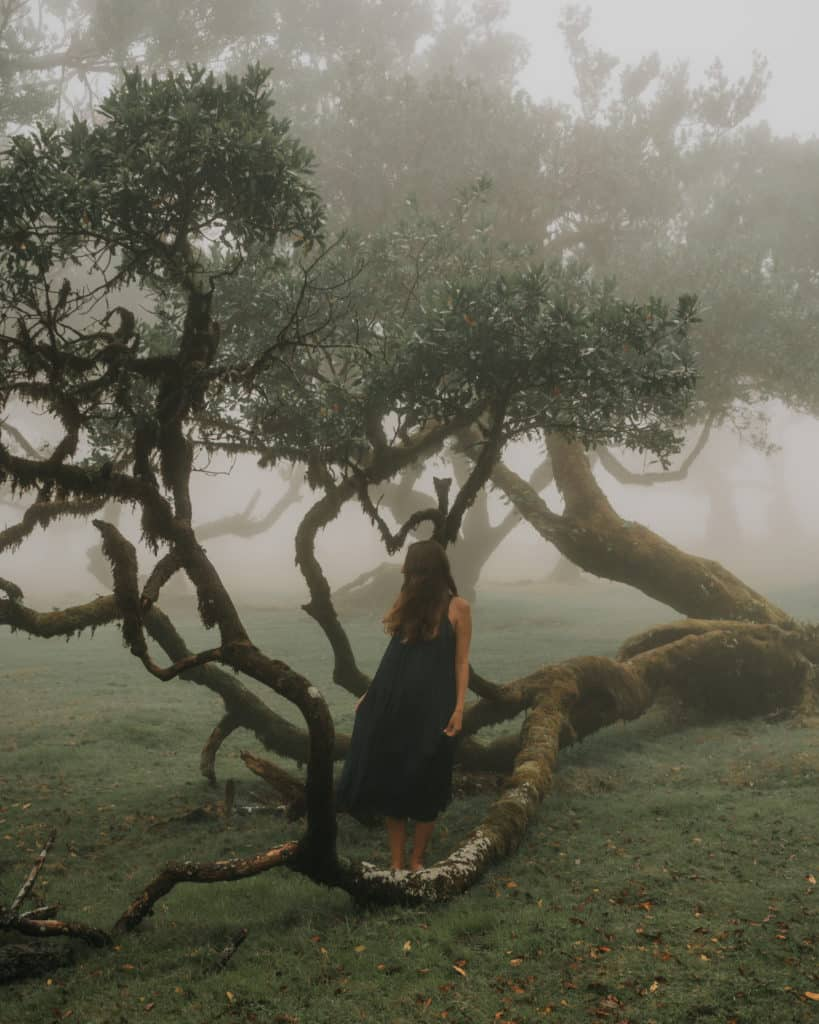 mystical bay tree forest Fanal Madeira