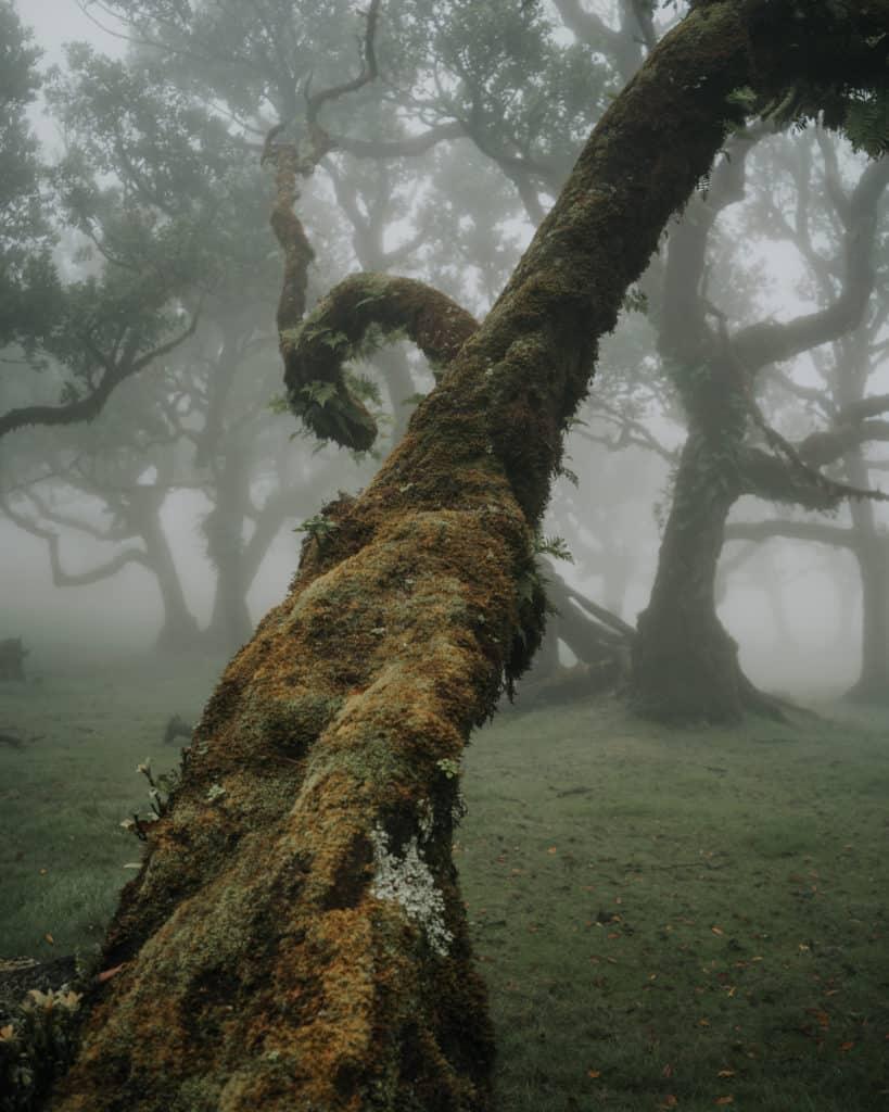 fanal mystical forest best photospots on Madeira