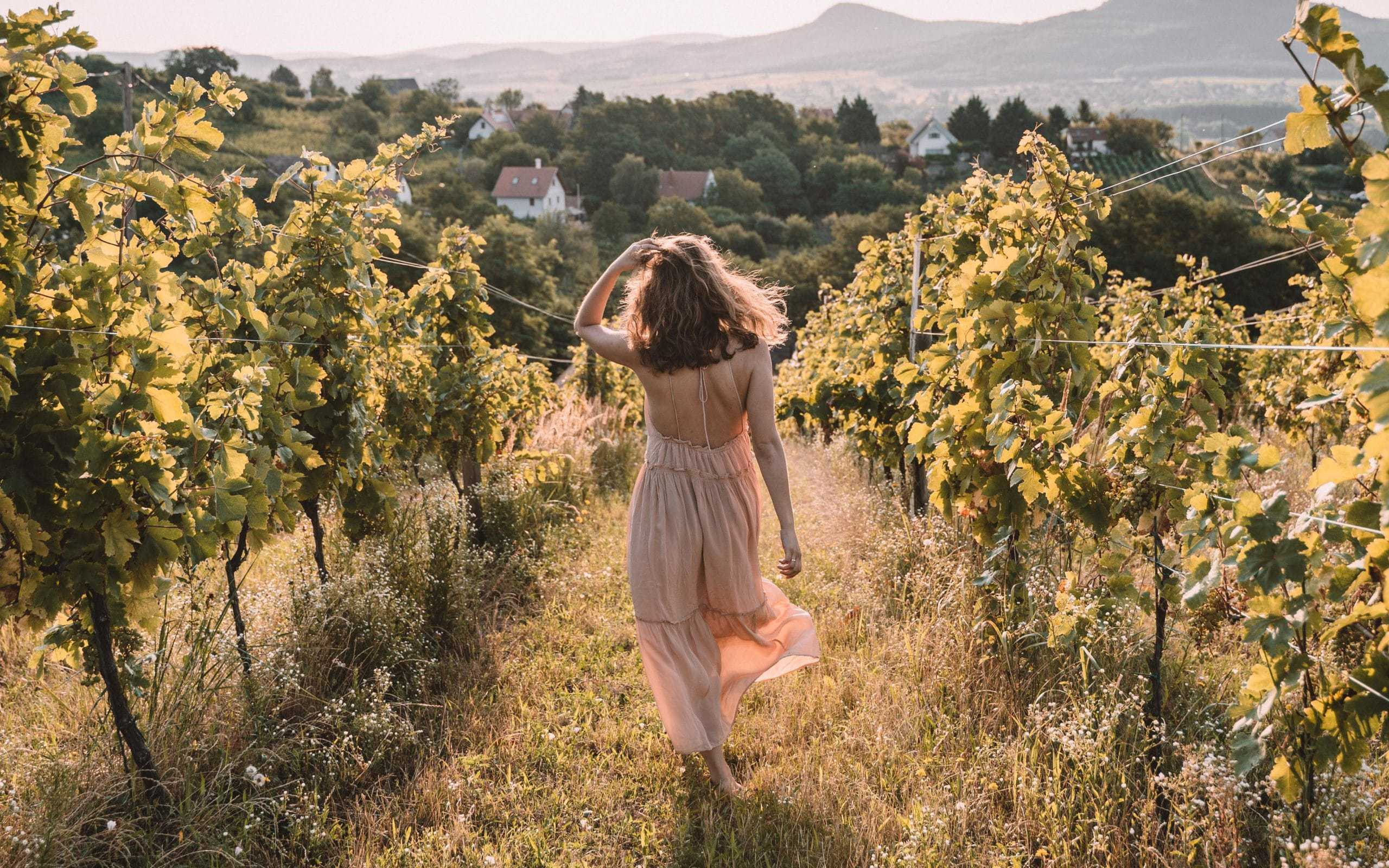 winiarnia wschód słońca winiarnie balaton