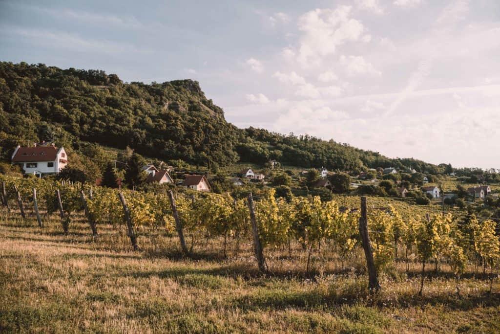 balaton węgry najlepsze winnice
