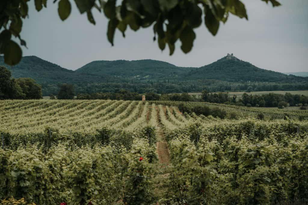 szaszi pince best winery balaton