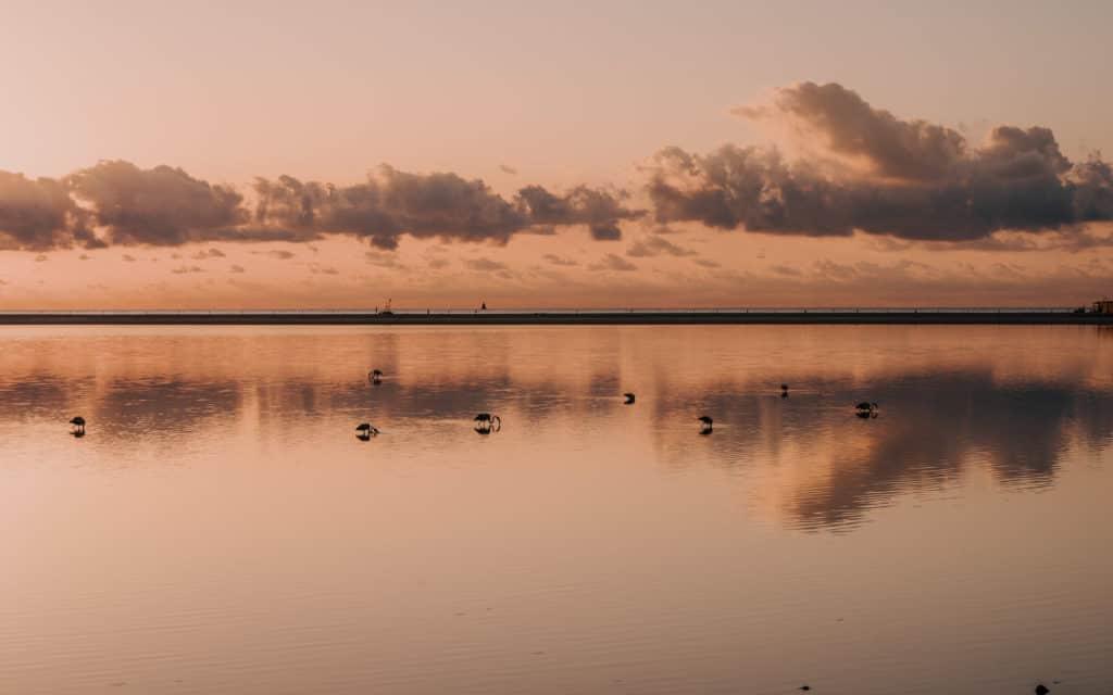 where to see flamingos sardinia