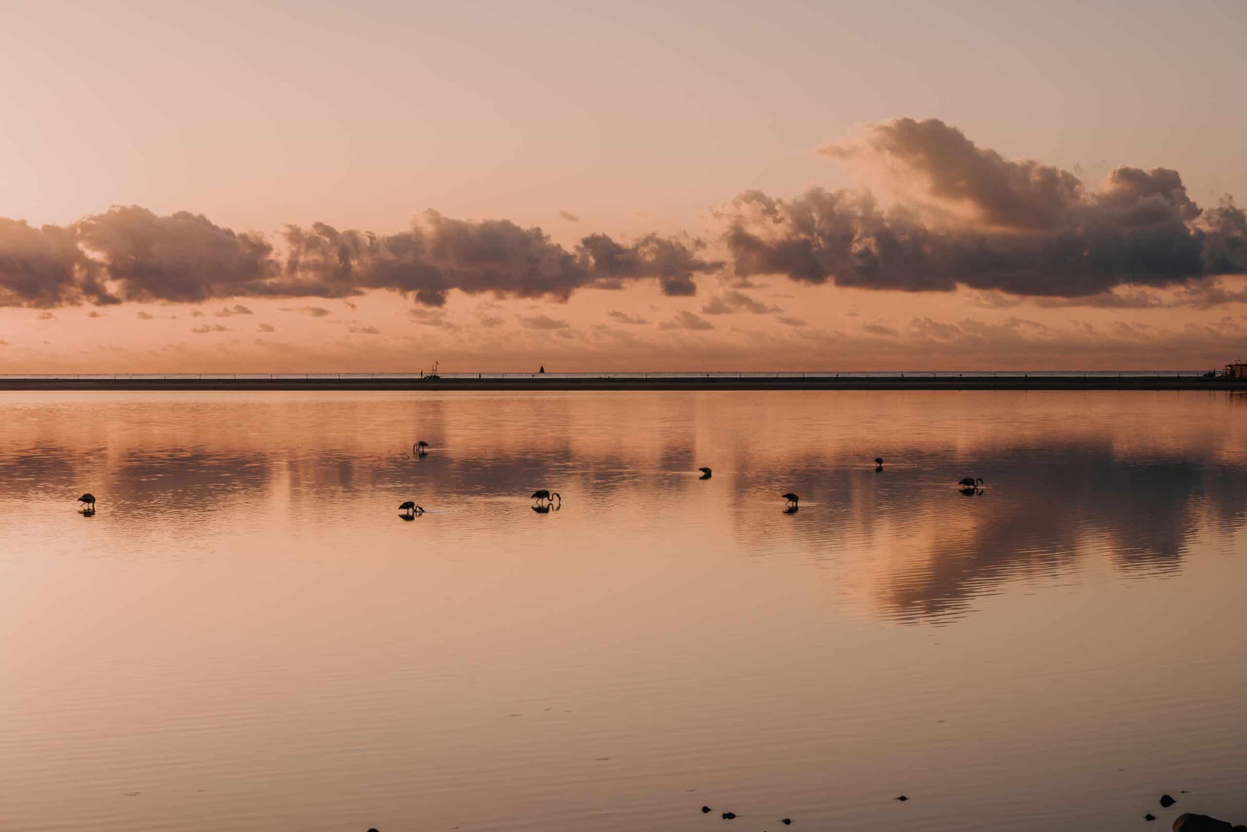 flamingi plaża porto guinco sardynia co zobaczyć na sardynii