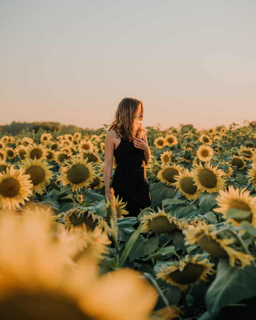 sunflowers sunset balaton top things to do