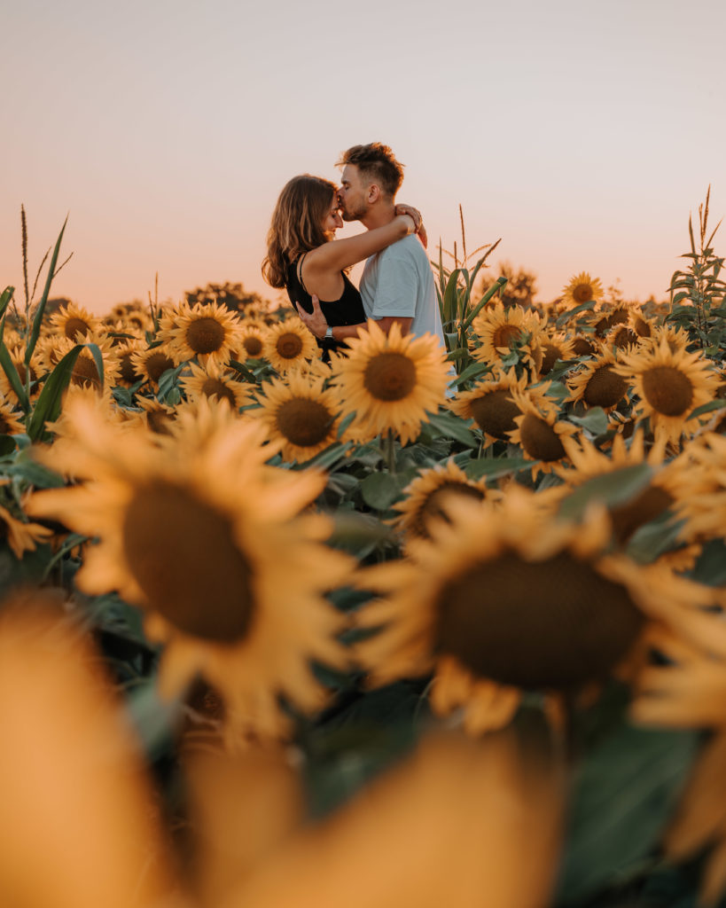sunflower field hungary balaton top things to do