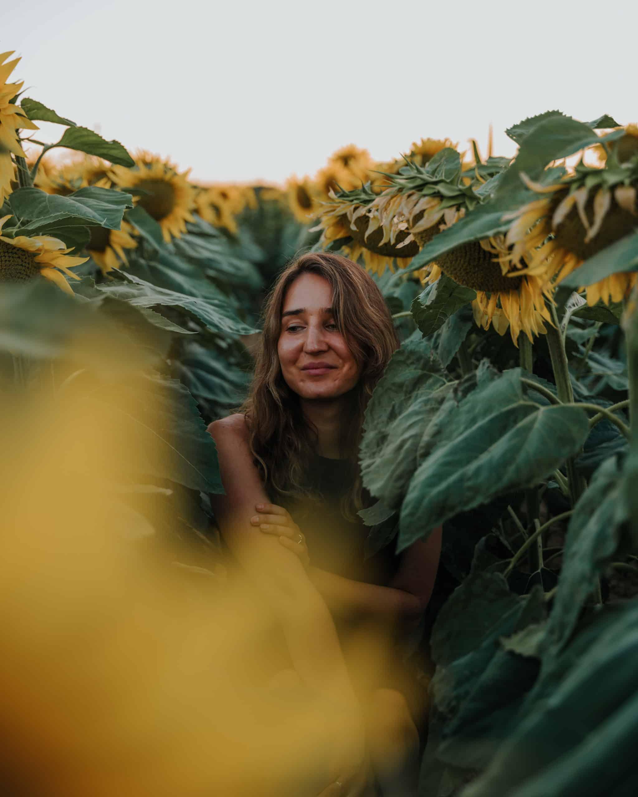 sunflowers portait balaton what to do