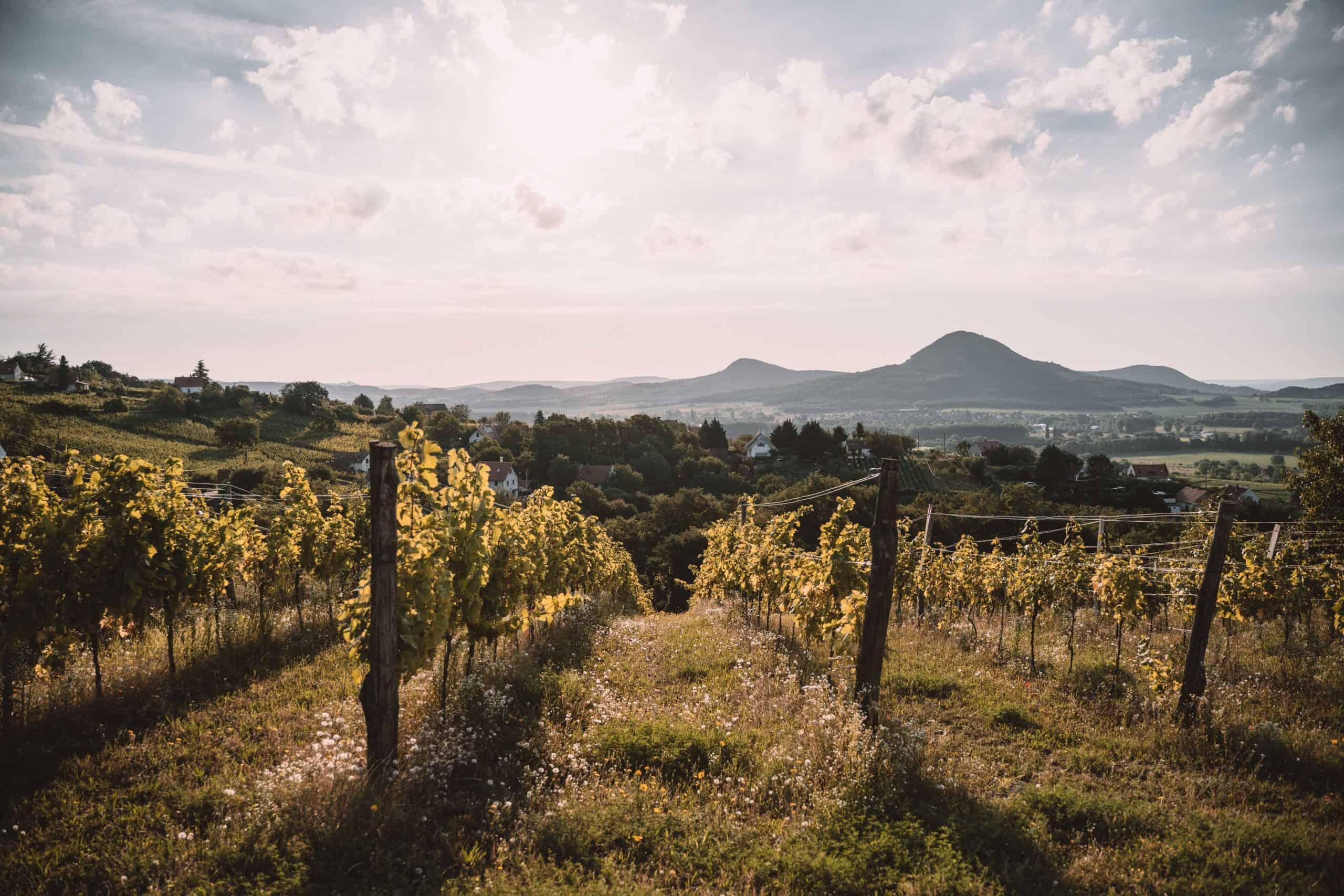 sunrise over wineries badacsony balaton