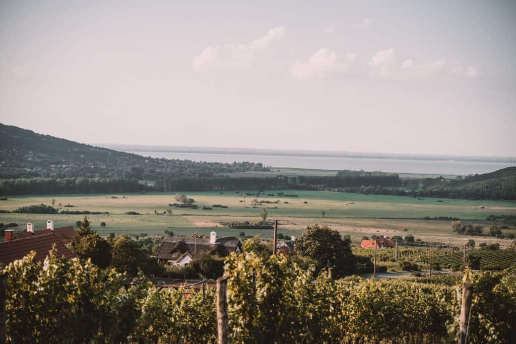 sunrise wineries balaton