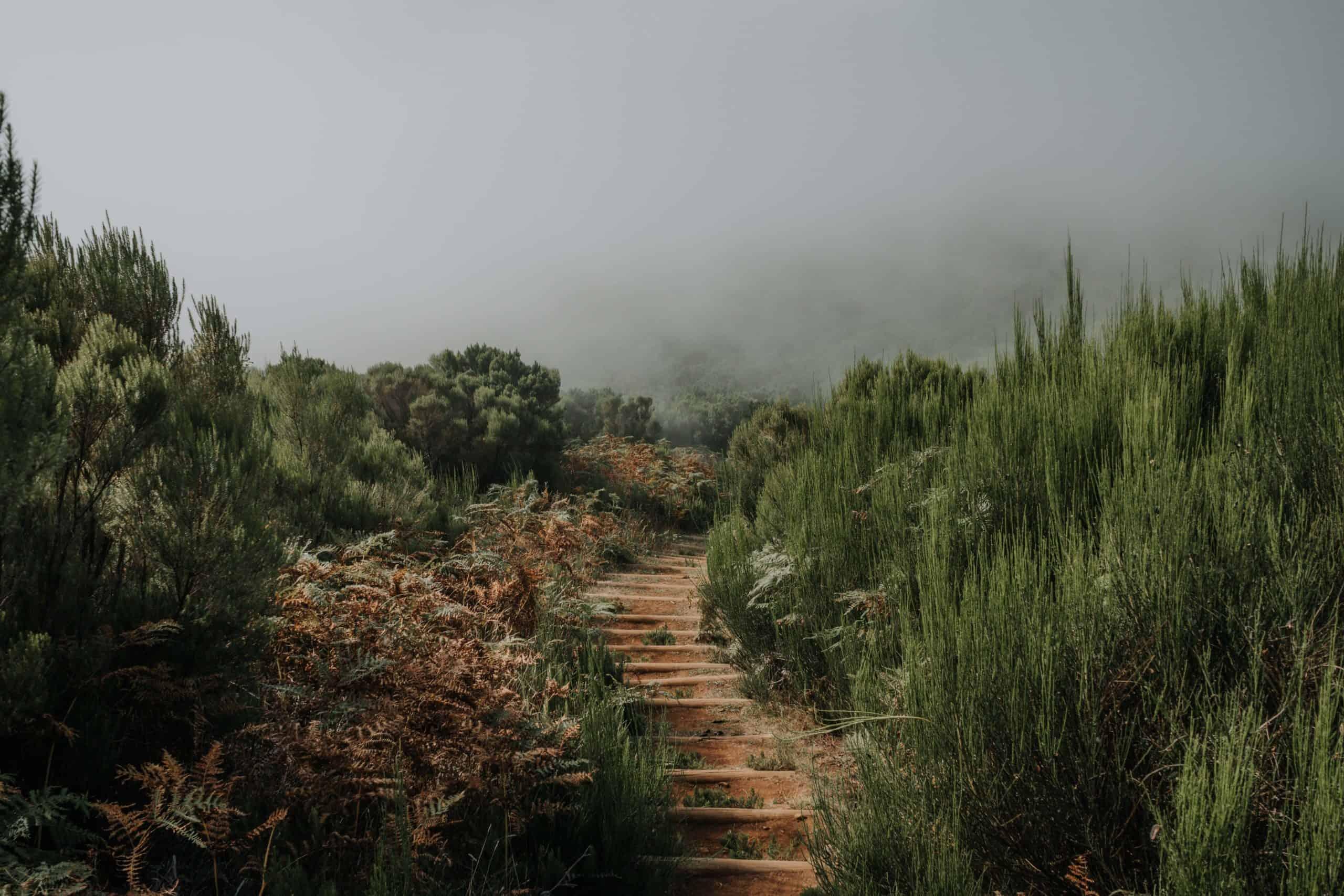 Madeira best hikes