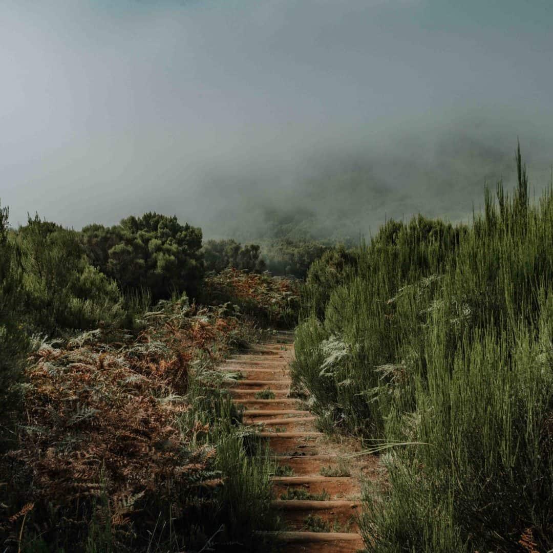 ścieżka na maderze